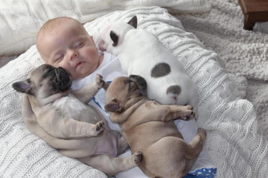 Seguro para perros y bebes