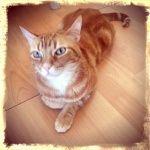 seguros para gatos adeslas