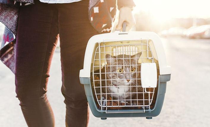 seguro viagem pet gato viajando