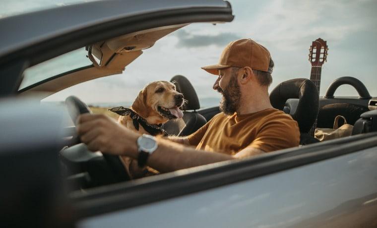 seguro viagem pets