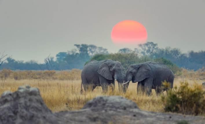 seguro viagem para safari elefantes