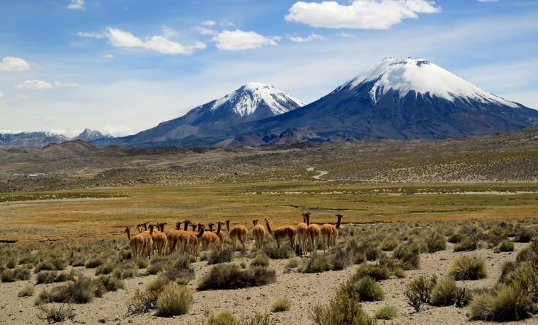 seguro viagem Bolívia lhama
