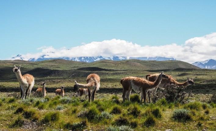 Paisagem seguro viagem Chile