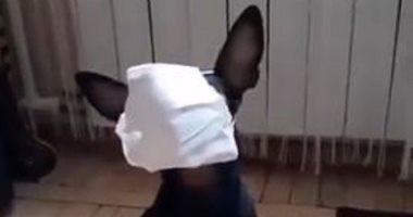 Photo of أصابة أول كلب يصاب بفيروس كورونا فى الولايات المتحدة