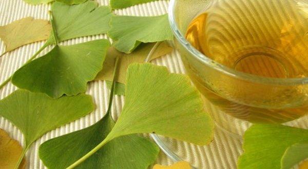 Dosis yang Dianjurkan saat Mengonsumsi Herba Ginkgo Biloba