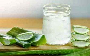 एलोवेरा जूस पीने के फायदे और नुकसान, Aloe vera juice benefits in hindi