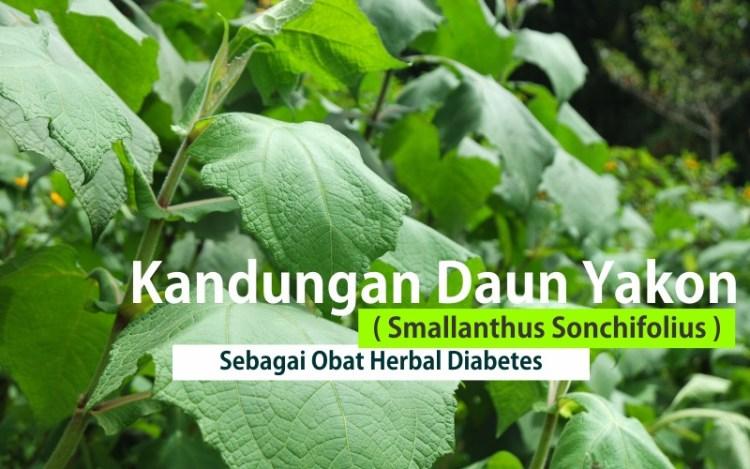 tanaman yakon smallanthus sonchifolius mengobati diabetes