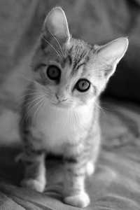Really cute kitten