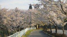 Tsunagi Onsen - Krischblüte