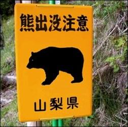 13富士山熊
