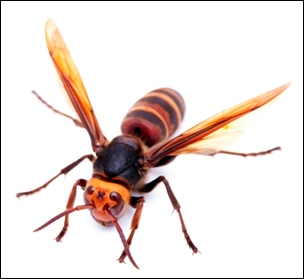 12スズメバチ