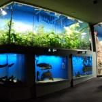 関西の水族館ベスト3 鳥羽水族館・海遊館・須磨海浜水族園を比較してみました