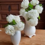 庭に咲いた小さなお花を飾ってみませんか?