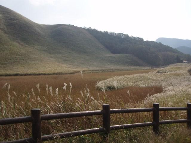 曽爾高原のススキ