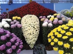 菊の展覧会その1