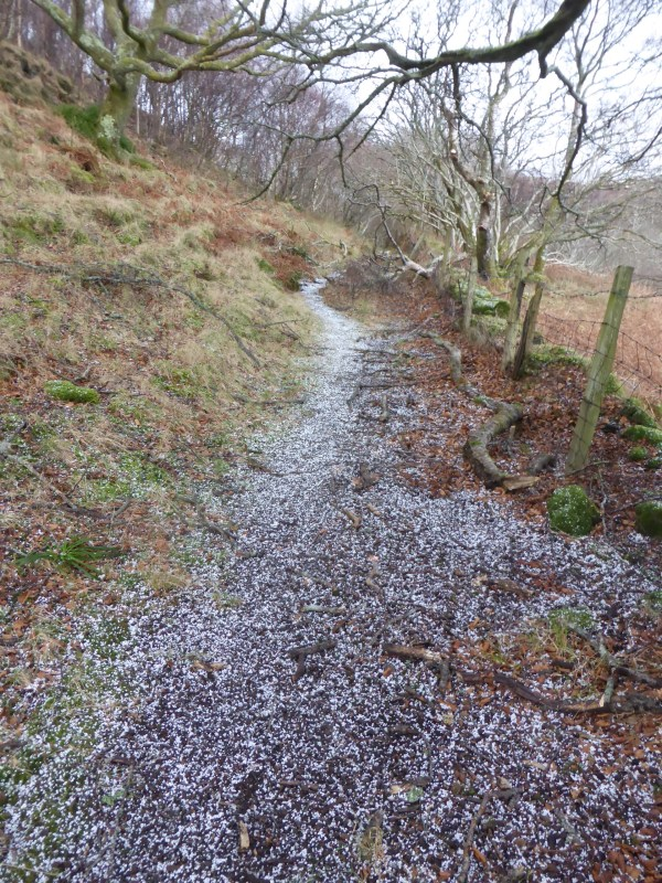 hail on path