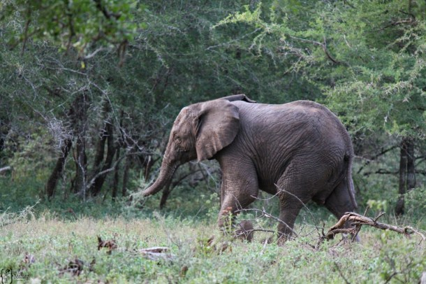 babyelephantkruegernationalpark