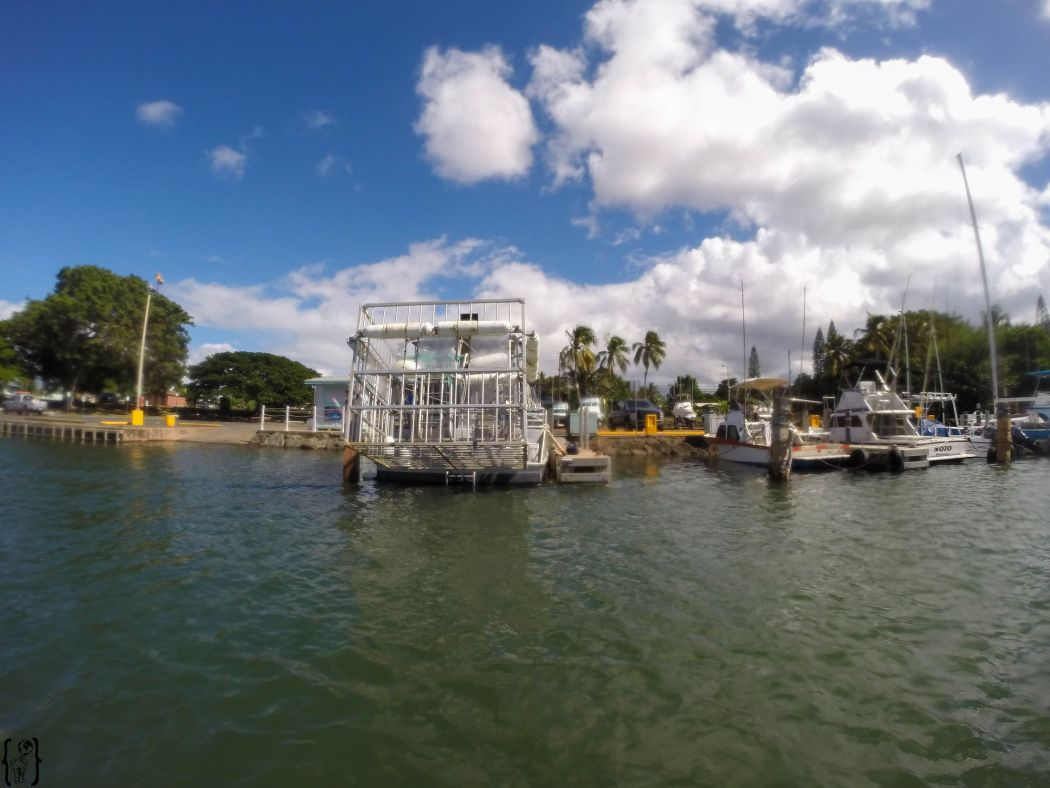 14 Cage diving Oahu