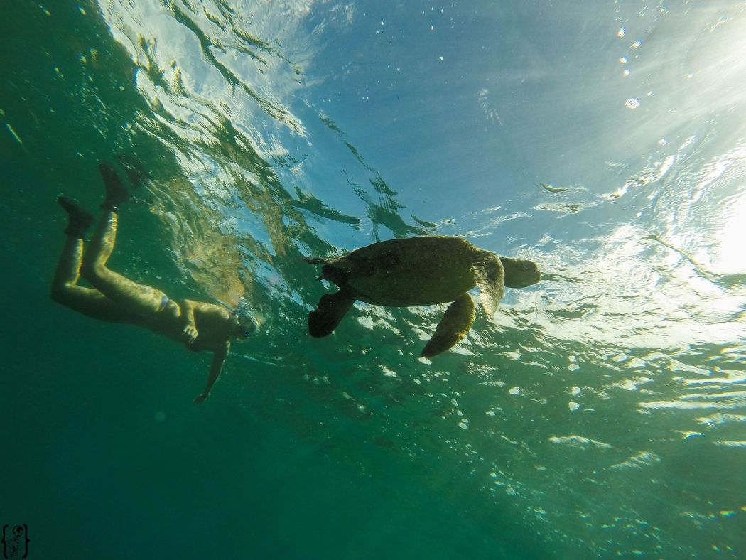 6 Snorkel with Turtle