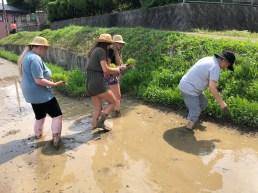 Rice planting begins