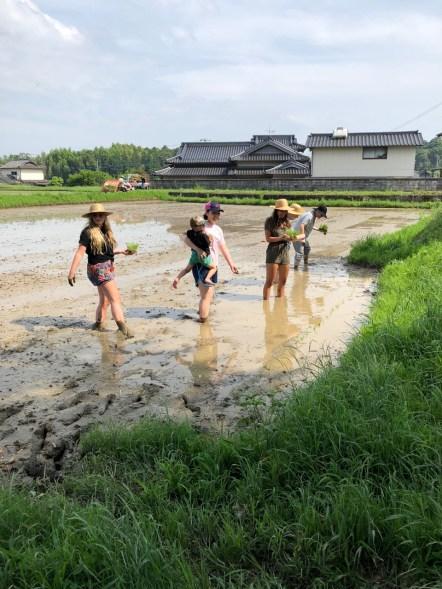rice-planting - 4