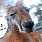 【4日目】カンガルーの肉はどんな味?!生肉をゲットして料理してみた!