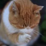 cat0055-051