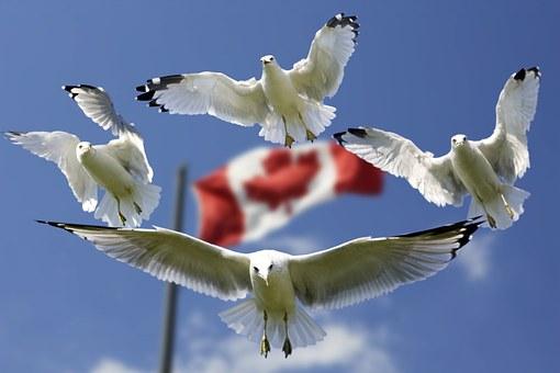 【越境EC】カナダの10月はイベントが盛りだくさん!!売れ筋商品は?