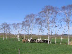 生花の牧場風景