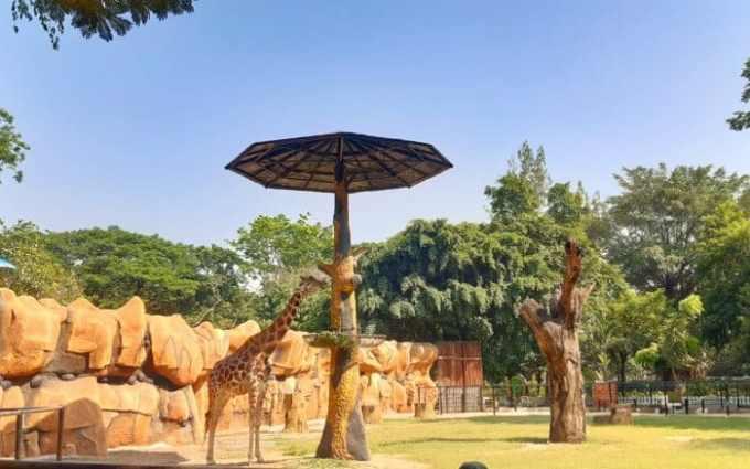Pernah Memiliki Kebun Binatang Terbesar di Asia Tenggara