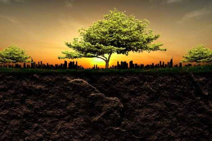 Contoh Teks Eksposisi Tentang Lingkungan hidup Beserta Strukturnya