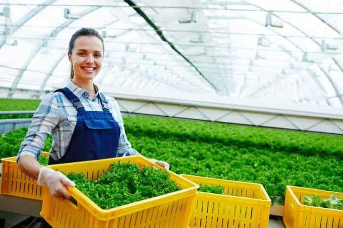 Contoh Curriculum Vitae Fresh Graduate Teknik Agrobisnis