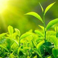 Efekty uboczne zielonej herbaty