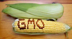 GMO rosja zakaz