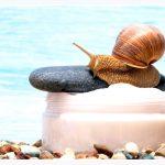 Śluz ślimaka – 8 niesamowitych korzyści stosowania
