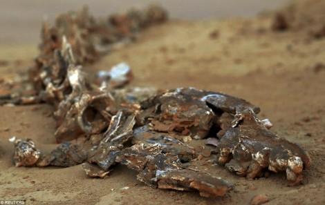 Whale Fossils In Egypt Desert