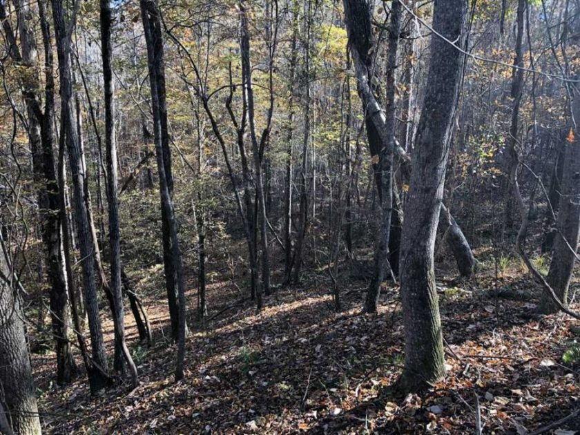 78 Acres Land for Sale Lamar County, Alabama - Mossy Oak ...