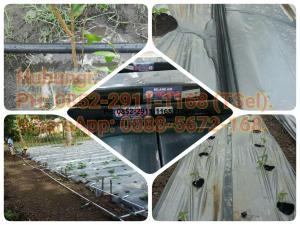 Selang Drip Pertanian Tanaman Cabe