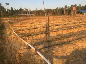 Selang Plastik Irigasi Tetes Pada Lahan Pertanian