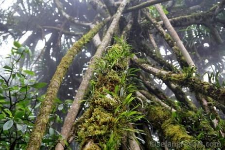 Orchideje na pandanu