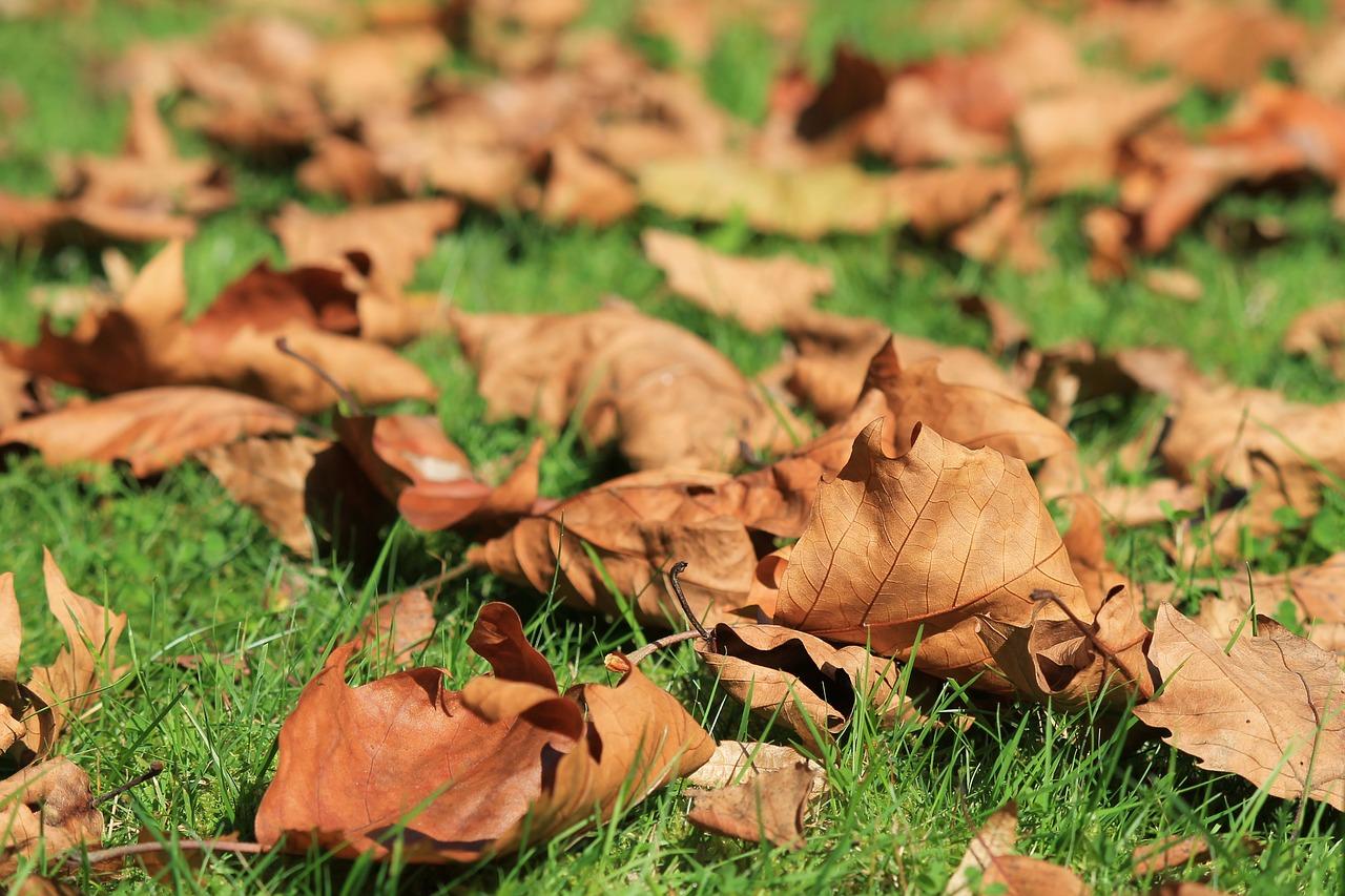 Herbstlaub auf dem Rasen