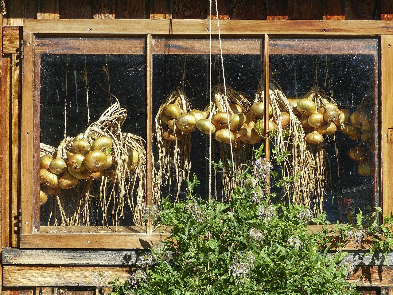 Getrocknete Zwiebeln hinter einem Fenster