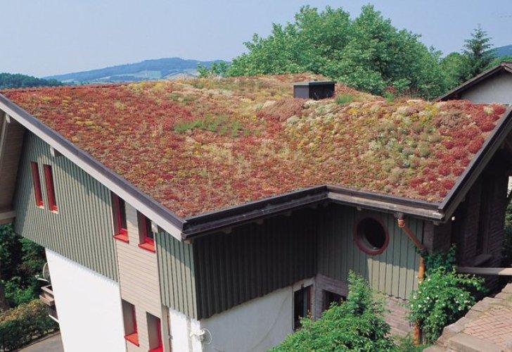 Blick auf ein Haus mit Gründach