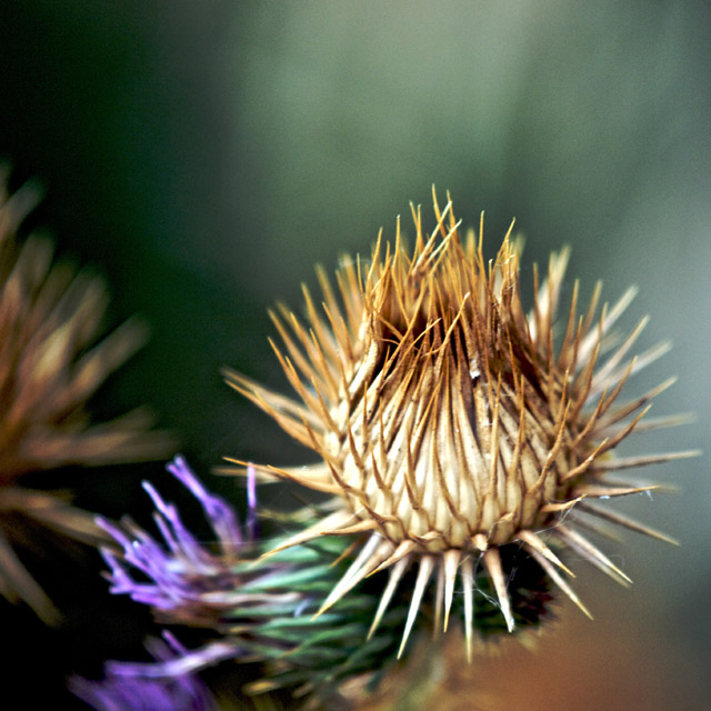 A bit prickly.jpg