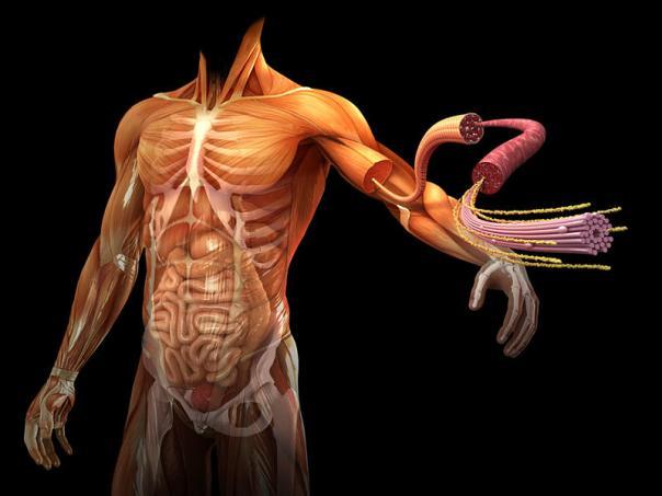 energia-organos-cuerpo