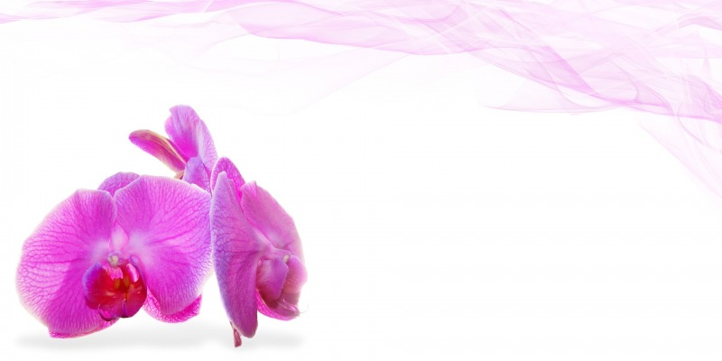 Orchid Flower Background 18
