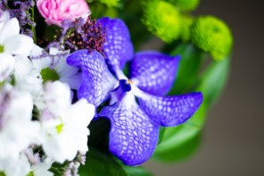 Orchid Flower Background 8