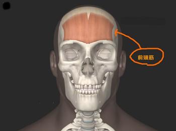 おでこの筋肉 前頭筋の画像