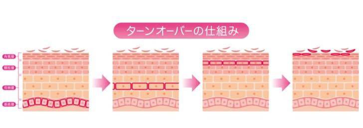 肌のターンオーバーの図解画像