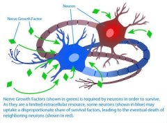 9 Effects of Nerve Growth Factor (NGF) + 50 Ways to Increase It